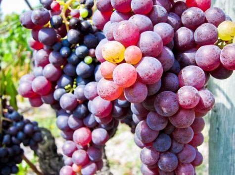 2015-05-23-1432406283-2346574-Grapes
