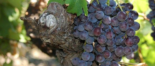 vini-wine-etna-rosso-0084