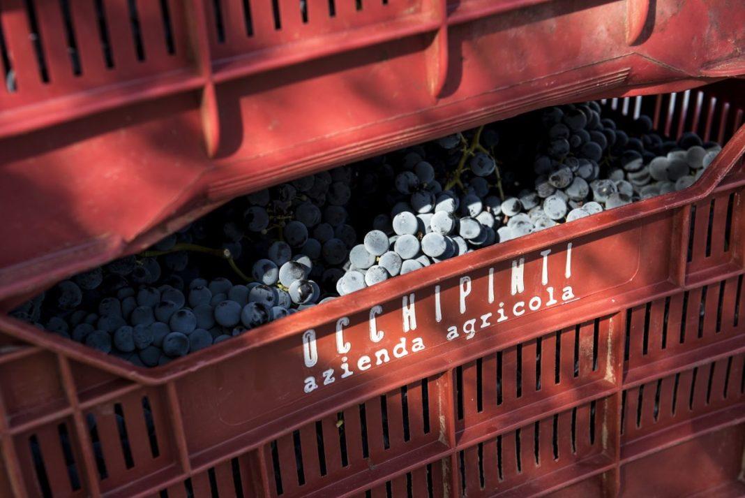 Azienda Agricola Occhipinti, natural wines in Sicily (Orange Wines)