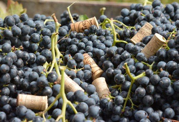 vigneti-vitivinicola-lombardo-14