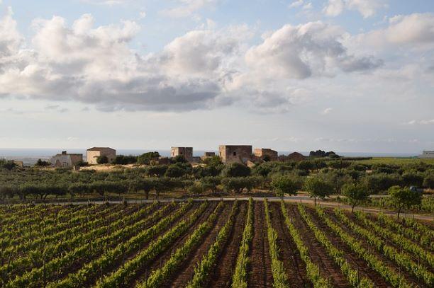 """Sabbia, saline e mare: il vino di Marsala ne """"I leoni di Sicilia"""", di Stefania Auci"""