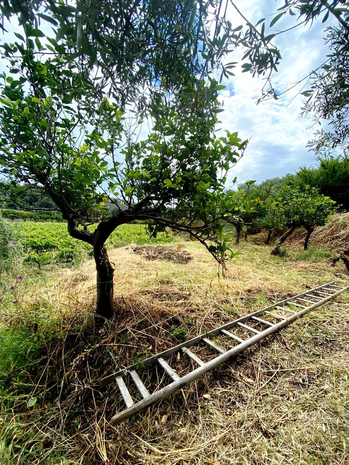 Il Mamertino. Il vino siciliano che piaceva ai Romani